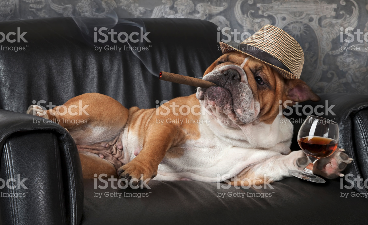 funny istock photo dog